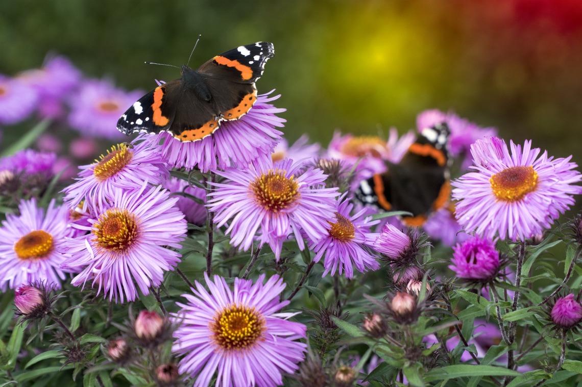 nature-3152943_1920.jpg