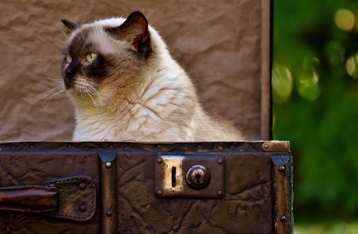 cat-3179223_1920.jpg