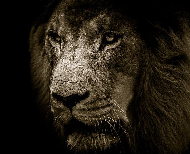 lion-3007701_640