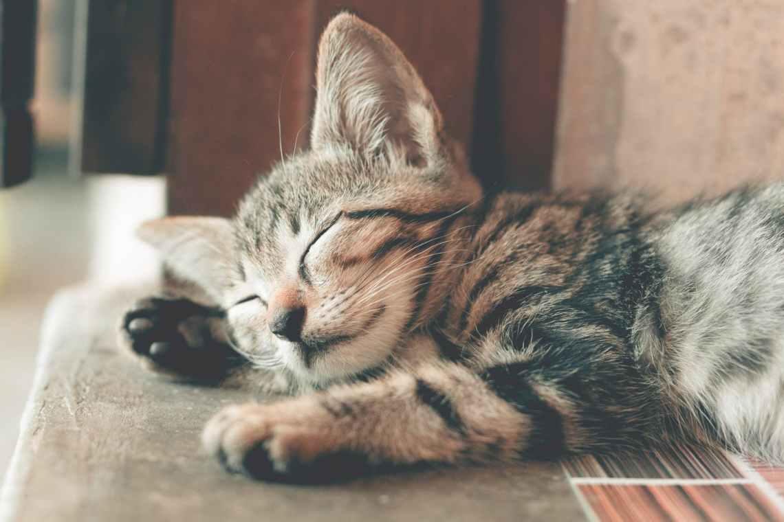 cat sleeping happy.jpeg