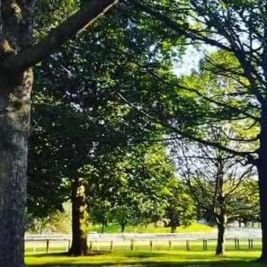 Ponte Park1